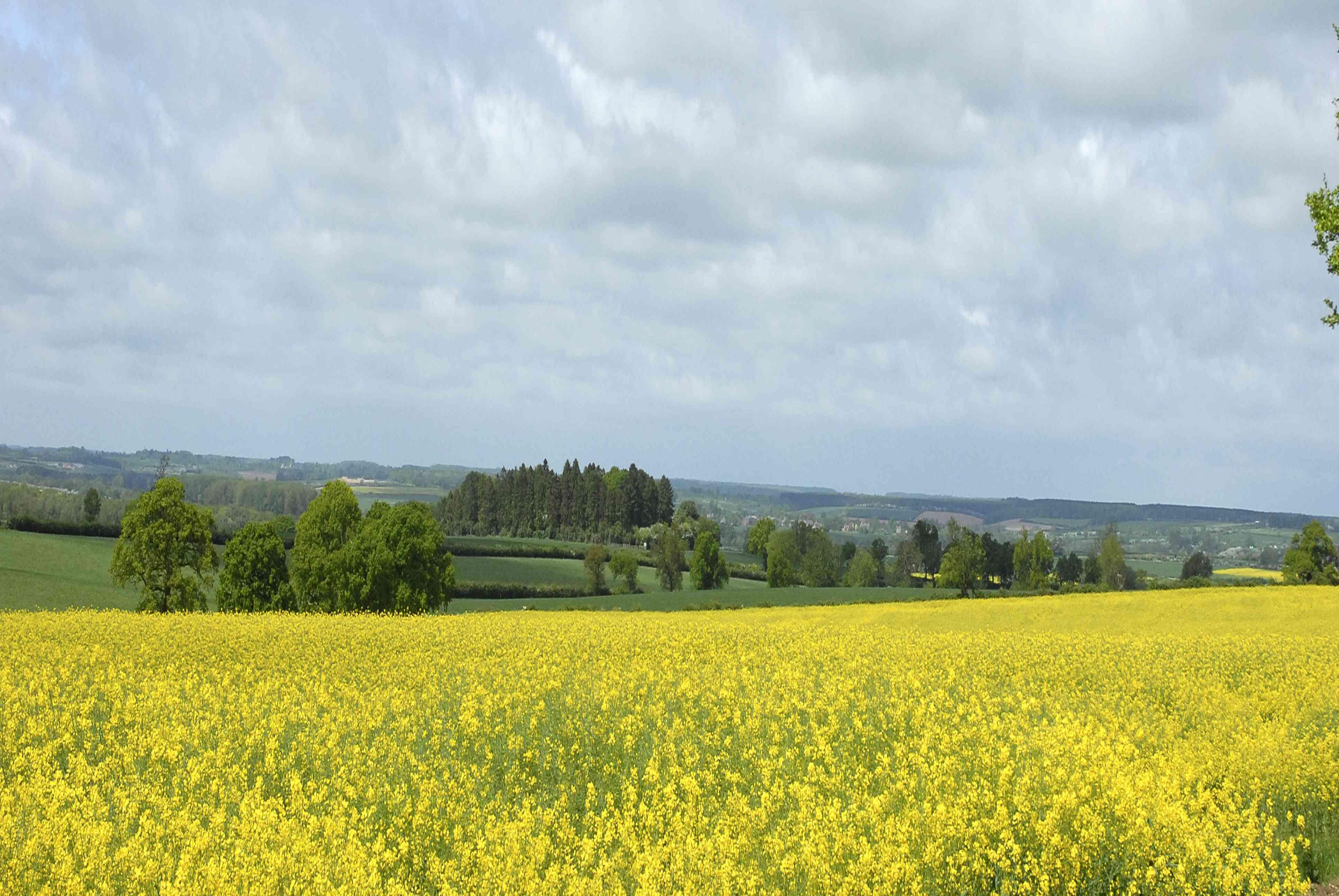 Fieldview