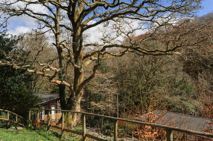 Hillside At Gara Mill In Slapton18