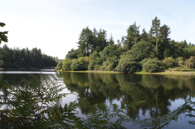 Pond View Near Totiford Reservoir
