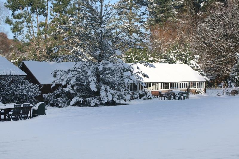 Vine Cottage, New Forest
